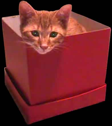 Murphy - cat in a box